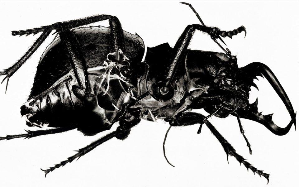 """Progetto fotografico per la copertina di """"Mezzanine"""", Massive Attack, 1998"""
